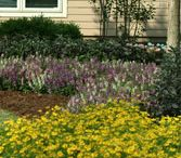 Flower Power and other landscaping ideas / Ideas for landscaping our our house! / by Adriana Kraus
