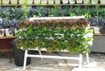 Organic Gardening / by Sharolyn Brandhagen