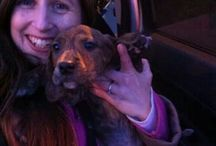 LDDR transport diaries, how lives are saved! / by Last Day Dog Rescue
