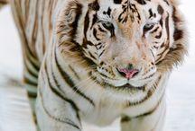 animals / by Kelly Hansen