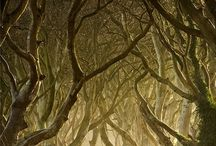 Trees that make me swoon / by MossyBrae Fairies