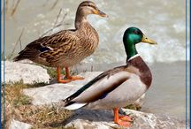 Pulaski County USA Wildlife / by Pulaski County Tourism Bureau & Visitors Center