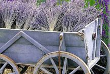 The color purple / by Loralie Upton