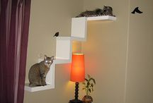 Pampered Pets / Cool idea! Maybe it could be done with book shelves beneath it?! / by Laura Fessler