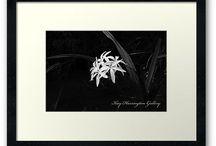 Elegant Floral Pictures / Black And White Floral Art / by Kay Harrington Prints