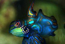 Fish tank / by VietMom