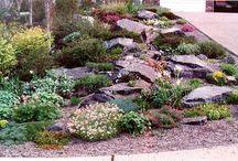 My Backyard Garden / by Backyard Gardener