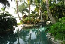 Tropical Gardens / by Clare Hofmann