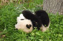 Panda / by Kranked