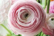 Beautiful Flowers / by Nicky Kegen