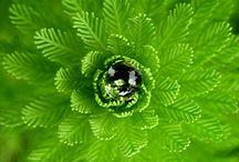 Color Wheel: GREEN / All things GREEN: Apple green. Asparagus. Bright green. Cal Poly Pomona. Chartreuse. Dark olive green. Dartmouth green. Fern green. Forest green. Green. Green-yellow. Harlequin. Honeydew. Hunter green. India green. Islamic green. Jungle green. Lawn green. Lime. Lime green. Mantis. Mint. Mint cream. Office green. Olive. Pakistan green. Paris green. Persian green. Phthalo green. Pigment green. Pine green. Pistachio. Sea green. Shamrock green. Spring bud. Spring green. Teal. Yellow-green. / by Katy Proudfoot