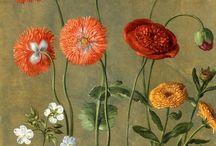 Flores I I/ Botanica / by Teresa P B