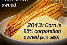 Monsanto and GMO / by Matthew Bunge
