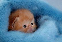 cute cat pics / by Helen Middaugh