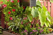 Gardening! / by Maria de Benedictis