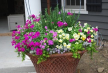 Container Gardening / by Pam Davis