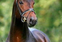 Equine luvr / by Denise Walker