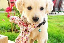 Puppy Love / by Kyrsten Daugherty