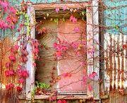 Colors / by Jen Eckert