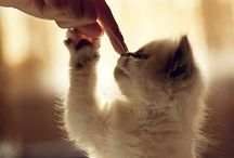 Kittties!! / by Brianna Hoefer