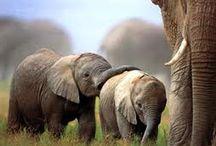 Elephants / by Kathleen Calahane