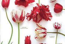floral board: tulips  / by The Perfect Petal