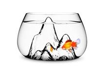 One Fish, Two Fish / All things fishy. / by Flint RiverQuarium