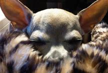 WOOF / I LOVE DOGS ♥ / by Debi Bowman
