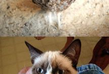 Grumpy Cat / by Hannah Brzuchalski