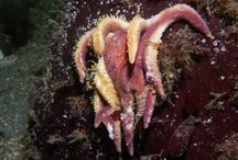 Recent Blog Posts / Images from posts on deepseanews.com / by Deep Sea News