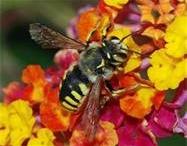 Bees Knees / by Karen Rinehart