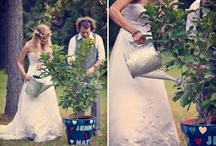 Wedding / by Megan Steeves