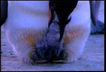Penguins / by Colette Klein
