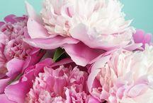 Favorite Flowers / by Katie Bailey