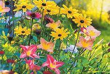 Garden / by Andrea Gluckman