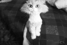 Kitsy Cats / by Chelsea Abney