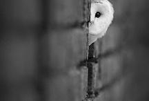 Cute Critters / by Kara Firstenberger