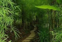 Bamboo Destinations / Visit these locations to see the plants our wonderful products our made out of - Bamboo! / by Bum Boosa