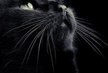 Crazy Cat Lady / by Maja Bubanj