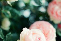 [ Flower ] / by Michelle Rhee