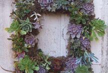 Wreaths / by Paul J. Ciener Botanical Garden