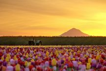 Oregon - I love my state! / by Matt Alex