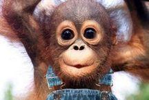 cute animals!!! / by Greta Ertzgard