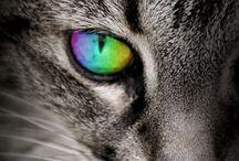 Pets / by Susanne Nilsson