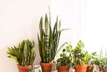 Plants, flowers, and planters / by Hannah Hoshide