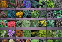 Garden / Small, open to medium shade front yard / by Natasha Sokol