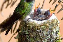 birds / by Susan Farr