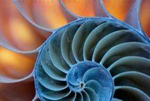 nautilus / by Lori Wolfe
