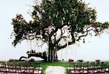 Wedding / by Nancy Rogers