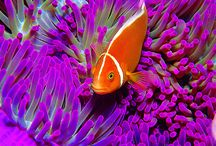 Sealife / by Mary Lou Ritter-Wolfe